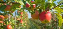 Agriculture : Appel à projet - Accompagnement technico-économique pour la valorisation des fruits des vergers hautes tiges