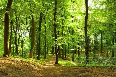 forêt ensoleillée