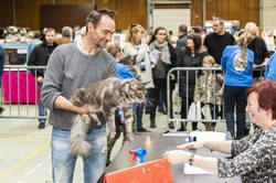 salon du chat 2k19 014
