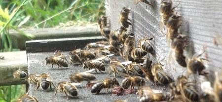 Vers une apiculture naturelle