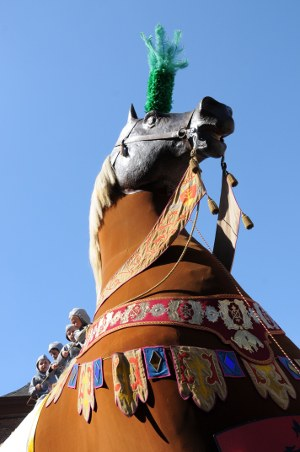 photo cheval bayard ath