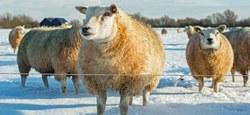 Dispositions pour les animaux de prairies durant la période hivernale