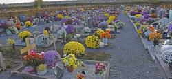Entretien des cimetières : les fleurs retirées trop tôt à Maffle