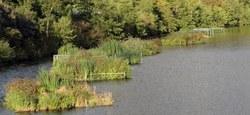 Entretien de la végétation et préparation des carrières de Maffle pour les journées de l'eau