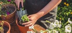 La Ville d'Ath recrute un bachelier en agronomie (h/f) pour entrée immédiate  au service des Espaces verts