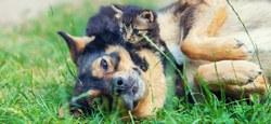 Ne prenez pas le risque de perdre votre animal de compagnie