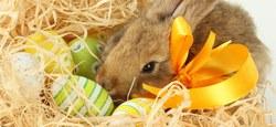 Maison pour Tous : activités de Pâques