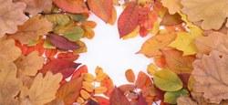 Maison pour Tous : activités de septembre à décembre