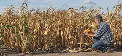 Avis aux agriculteurs : commission de constat de dégâts aux cultures
