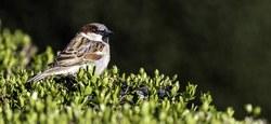 Le Parc naturel du Pays des Collines organise son concours photos