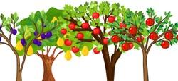 75  arbres fruitiers demi-tige à gagner